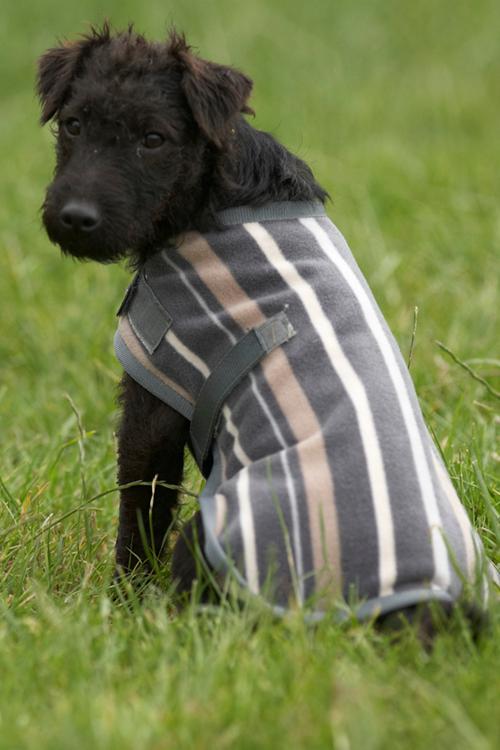 warm-coat